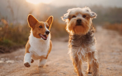 Everything You Need to Know about Pets at Villa Del Sur