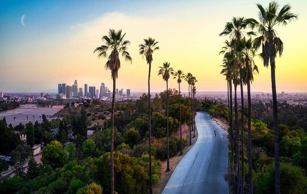 Palm trees near city